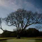 bunratty-meadows-14