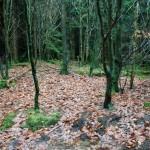 bunratty-meadows-9
